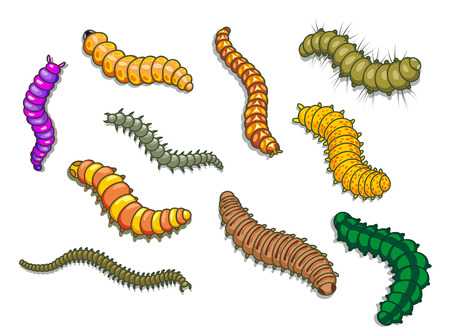 pupa: Cartoon worms and other insects. Vector illustration