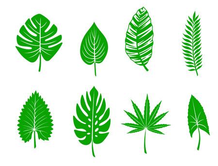 Set of green tropical leaves. Vector illustration