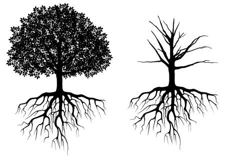 arbol: Árbol con raíces aisladas en blanco. Ilustración vectorial