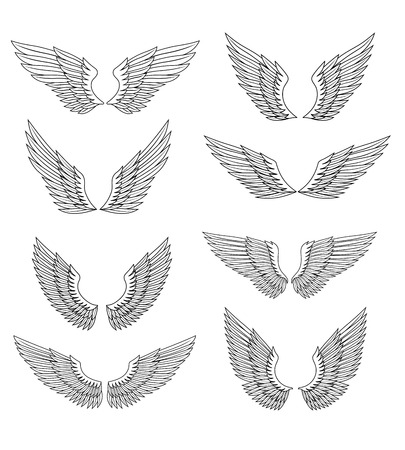 Heraldic wings and feather set for design, isolated on white