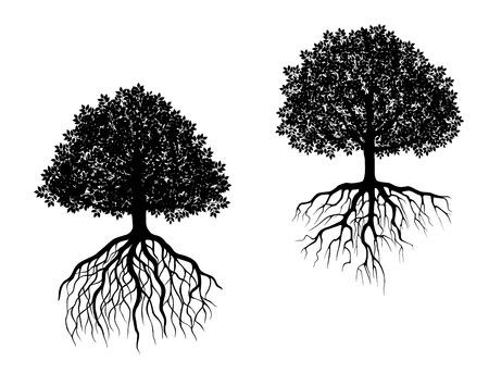 arbol raices: Árboles blancos y negros del vector que muestra diferentes sistemas de raíces con raíces fibrosas intrincados y marquesinas de hojas de diferentes formas Vectores