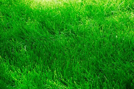 Summer green grass as a nice wallpaper or background Imagens