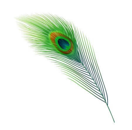 Peacock feather vector design of green plume of peafowl bird train tail with blue and brown eyespot marking. Indian peacock animal plumage, nature and wildlife themes