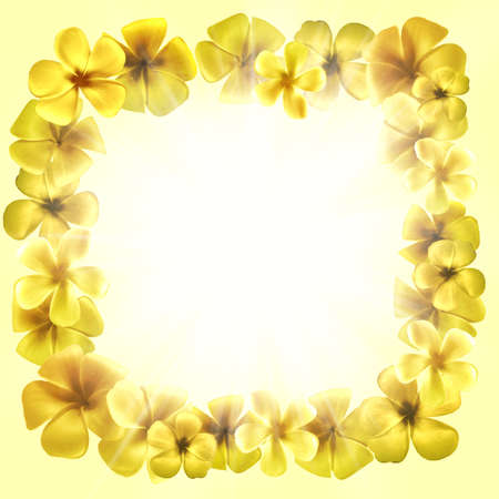 Design frame shape with golden plumeria flowers picture frames isolated on white . High resolution photo