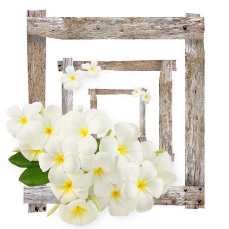Plumeria flowers on plank old frames isolated on white background photo