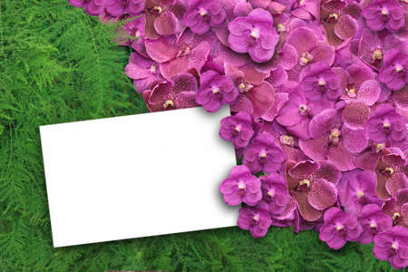 ferns and orchids: Purple orchid and fern background,white postcard for text Stock Photo