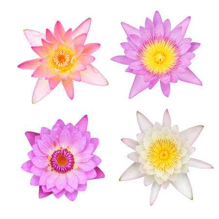 Collection of water lily isolated on white photo