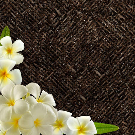 frangipani flower: Frangipani Blossom on dark wicker Stock Photo