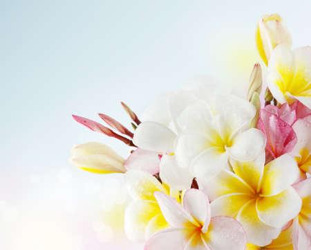 Frangipani Blossom photo