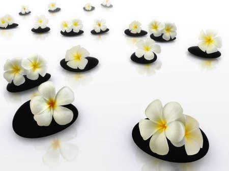 zen stones with frangipani flower photo