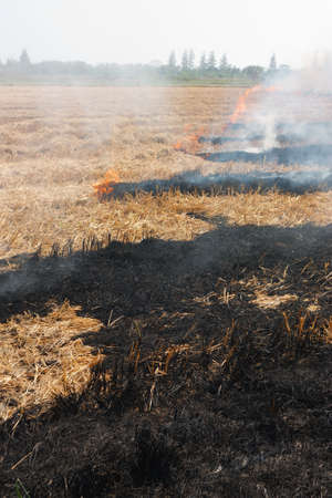 prescribed: Prescribed prairie burn on the Great Plains in Thailand