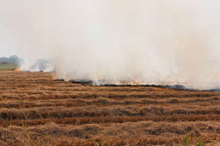 Prescribed prairie burn on the Great Plains in Thailand Stock Photo - 10371834