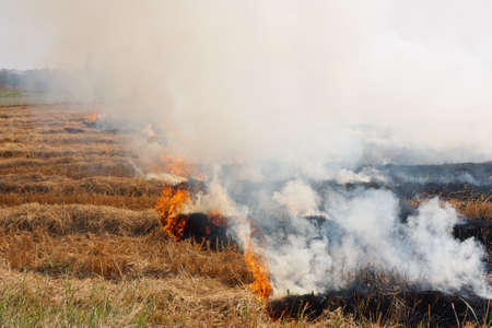 Prescribed prairie burn on the Great Plains in Thailand Stock Photo - 10371832
