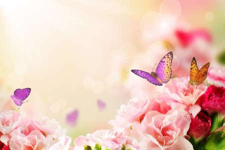 美しいカーネーションの花と蝶太陽光線の朝