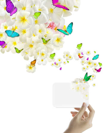 Creative female hand hold card with plumeria flowers and butterfly,isolated on white background Stock Photo - 10370644