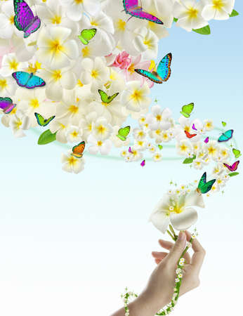 mariposas amarillas: Belleza femenina mano plumeria fluye mucho plumeria flores y mariposas, aislado fondos