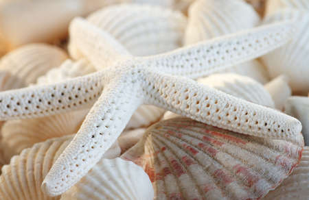 White finger starfish and seashells photo