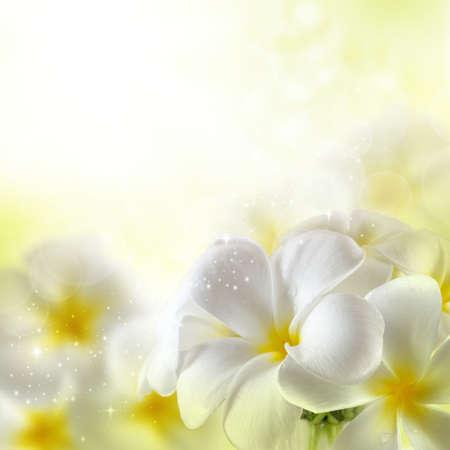 arreglo floral: Ramo de flores plumeria