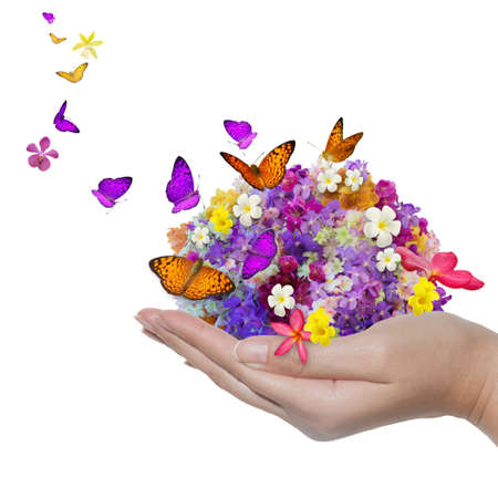 hand holds flower spill many flowers and butterfly photo