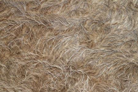 Close up of Buffalo fur background photo
