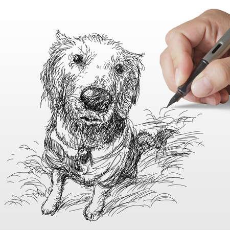 hand drawn Golden retriever dog on white background photo