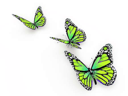 Butterfly isolated on white 3d illustration illustration