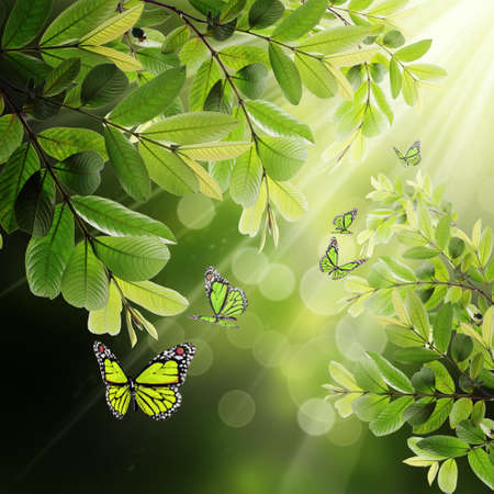 butterfly on the background of the young spring leaves and sunlight photo