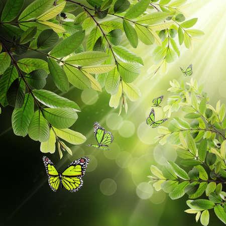 mariposa en el fondo de las hojas jóvenes y la luz del sol de primavera