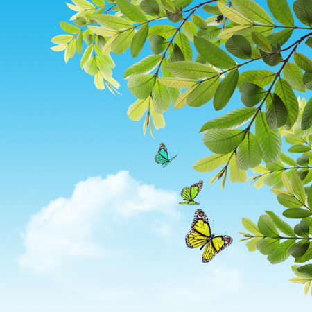 butterfly on the background of the young spring leaves with blue sky photo