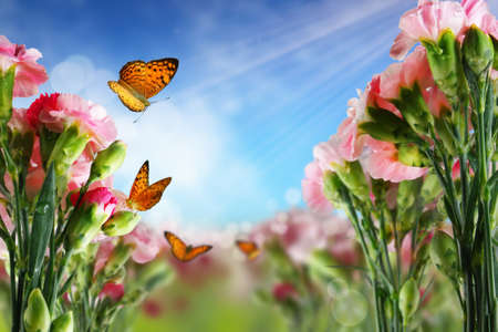 butterfly on many flowers  photo
