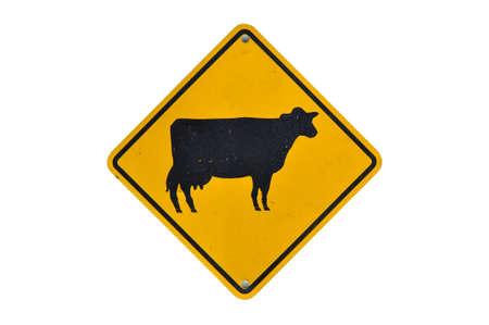 Cattle traffic warning on white photo