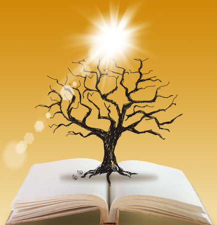 open book of Silhouette dead tree without leaves photo