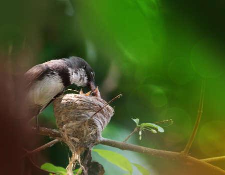 bird Stock Photo - 16097151