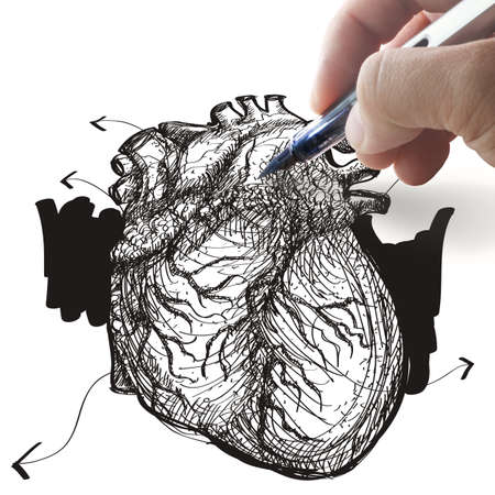 right ventricle: hand draws heart Stock Photo
