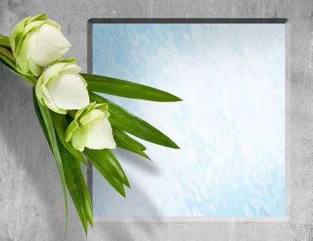 aquatic plant: lotus flower