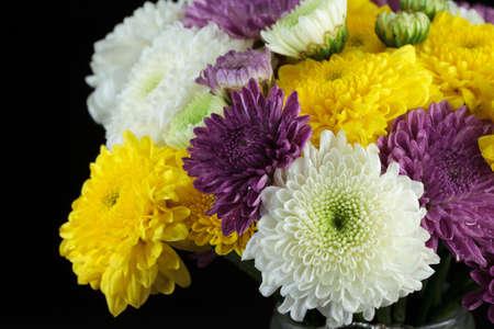 pom pom: Chrysanthemum daisies Stock Photo