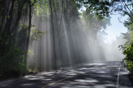 Lesní cesta. Krajina na pozadí