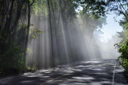 Forest road. Landscape for background Standard-Bild