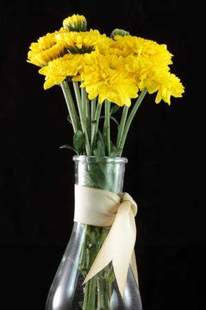 daisy flower Reklamní fotografie - 16424570