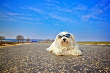 A dog with sunglasses lying on the road and basks in the background a beautiful blue sky
