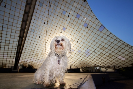 A small wet long hair dog sits on an outdoor stage in the scene  In the background, the stage roof and the back of the dog, the sun is shining