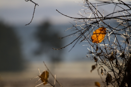 transience: A single autumnal orange-colored leaf on a bush and illuminated by the sun  In the background a blurry landscape  Stock Photo