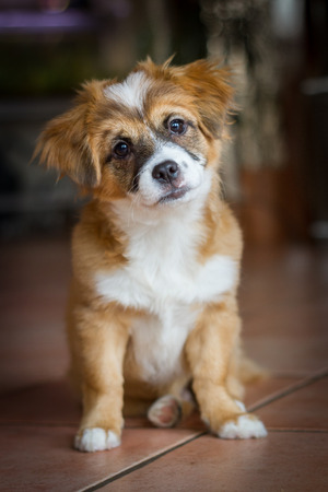 A Small mixed breed puppy sitting and looking very sweet with a slightly oblique held head into the camera Reklamní fotografie