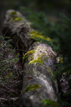 settles: moss settles on the tree trunk