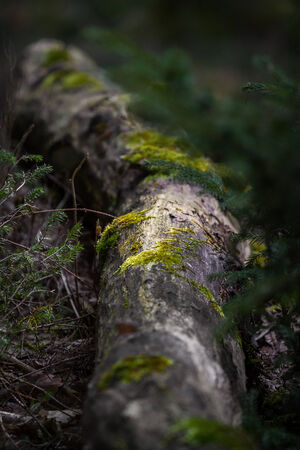ephemeral: moss settles on the tree trunk