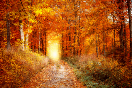 A forest path in a deciduous forest in autumn, at the end of the path the sun is shining.