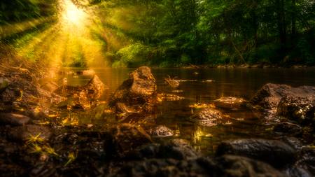 The sun shines through the leaves of the forest on the edge of the stream and illuminates the water and stones in the water.
