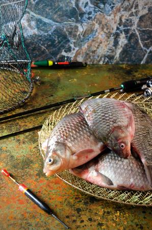 carassius gibelio: six crucian carp rod cage float on a bog color  background Stock Photo