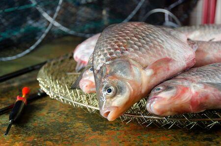 carassius gibelio: several crucian carp rod cage float on a bog color  background close up