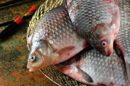 carassius gibelio: group crucian fishing rod cage float on a bog color  background close up flat lay
